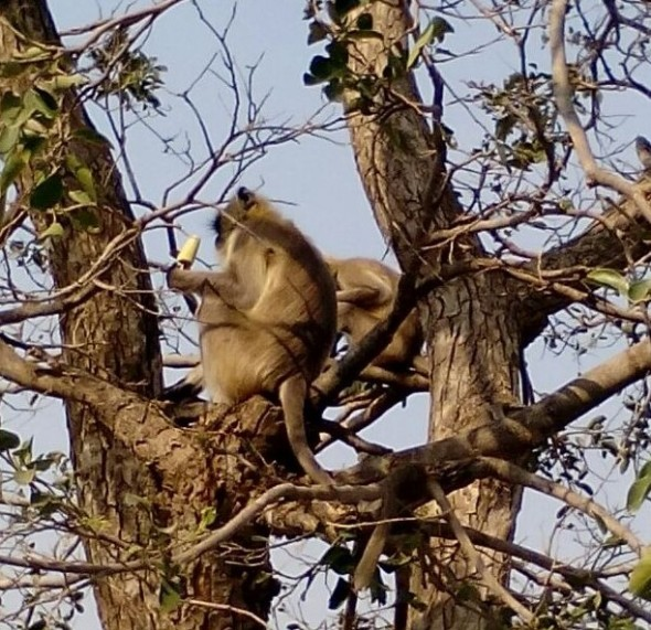 monkey-stealing-icecream